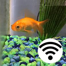 Using IoT, a Particle Internet Button, and Slack to Feed a Fish
