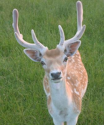 Geek Challenge Results: Deer Dilemma