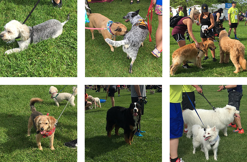 Photo collage of dogs at the PAWS 5K.