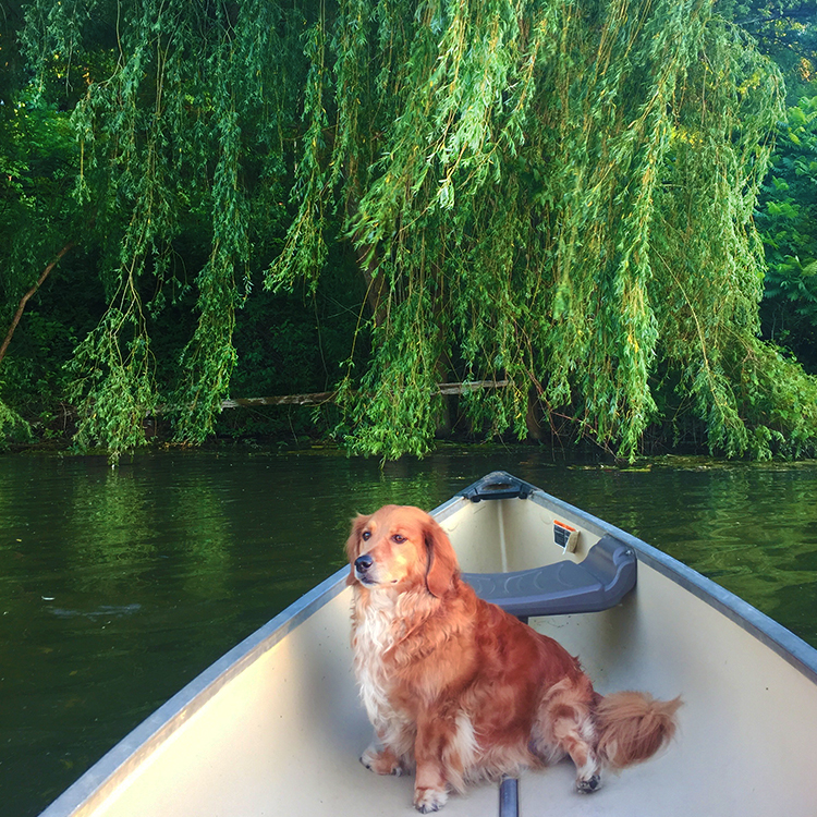 Photo of Wiskie sitting in a boat in the water by a willow tree.